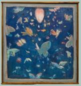 Moths, Cohen