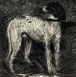 David Fertig, Etching and ink, Dog, 7 3_4_ x 7 3_8_ paper size